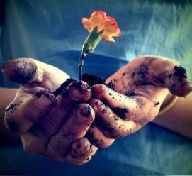 handflowergrowbpicshandsmud-a64426836da9f06c2f76e5968b841f2e_h_large